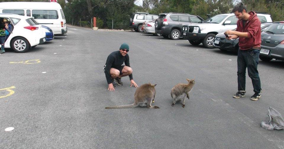 Vivere-in-Australia-2